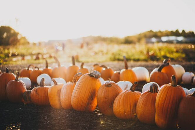 15 Vancouver Pumpkin Patches to Add to Your Fall Bucket List